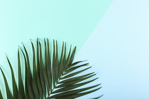 Foglie di palma su carta colorata. mood estivo, tropicale, vuoto.