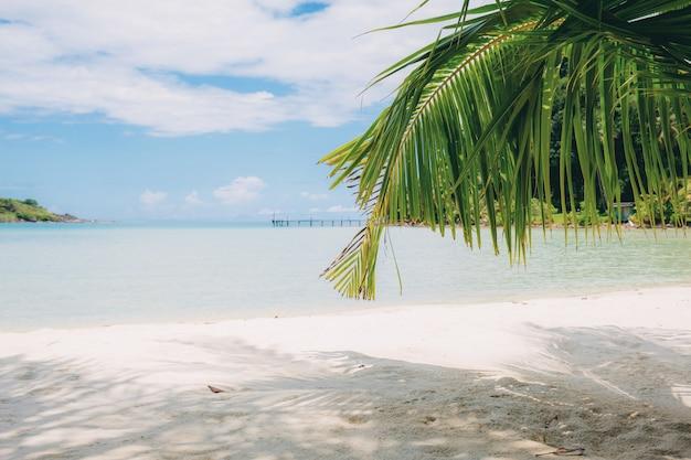 Foglie di palma sulla spiaggia con luce solare.