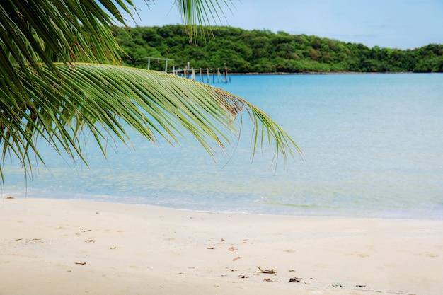 Foglie di palma sulla spiaggia.