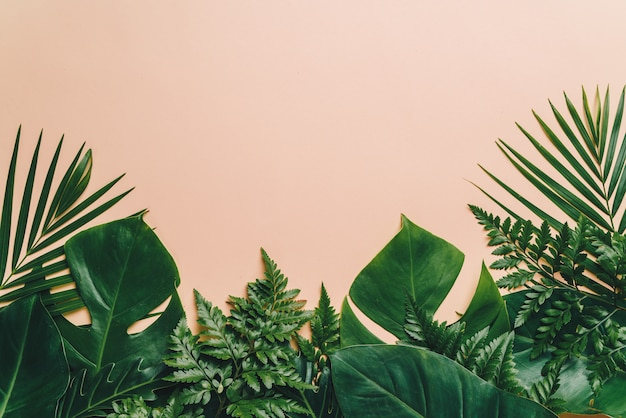 Foglie di palma tropicale con spazio di copia