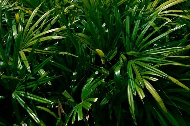 Foglie di palma tropicale, sfondo verde motivo floreale. foto di colpo chiave bassa.