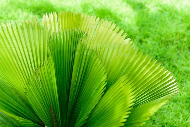 Foglie di palma tropicale, sfondo verde motivo floreale.