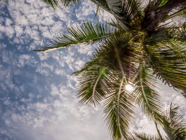 Foglie di palma tropicali con la luce del sole su cielo blu