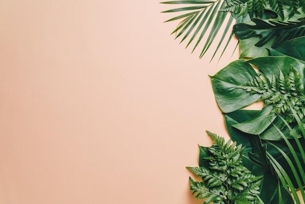 Foglie di palma tropicali con sfondo copyspace