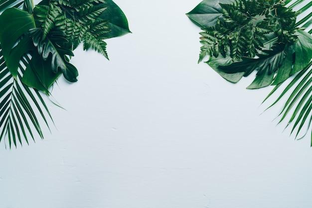 Foglie di palma tropicali con spazio di copia