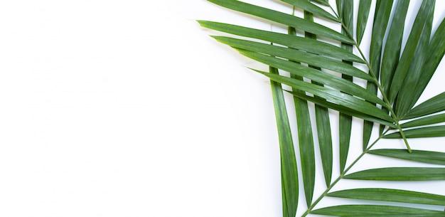 Foglie di palma tropicali su bianco.