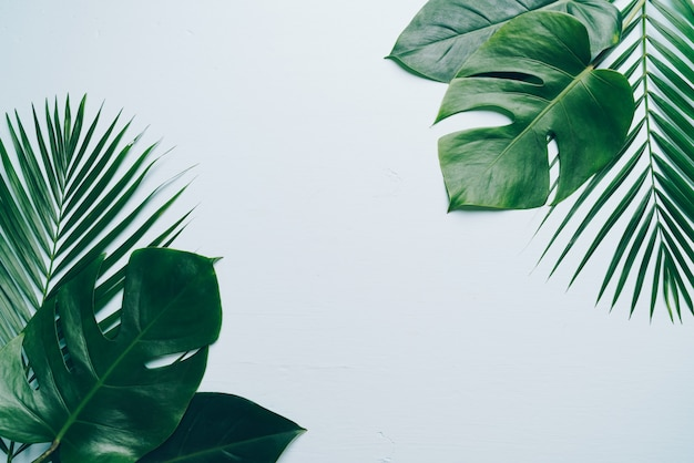 Foglie di palma tropicali sul fondo di colore con copyspace