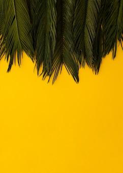 Foglie di palma verdi tropicali di disposizione piana sul fondo dello spazio di yellowcopy. concetto di estate natura minima
