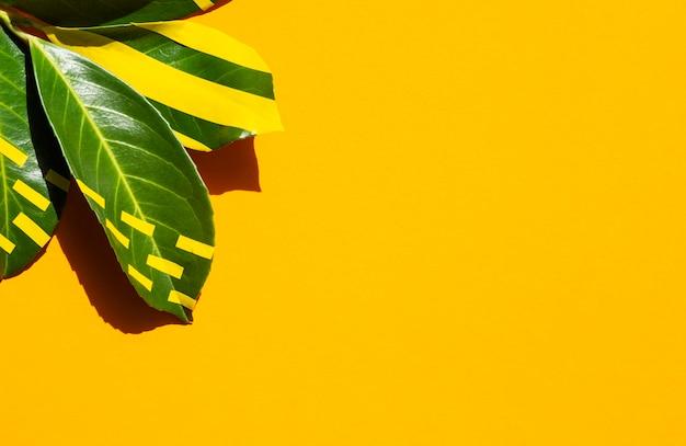 Foglie dipinte con sfondo spazio copia