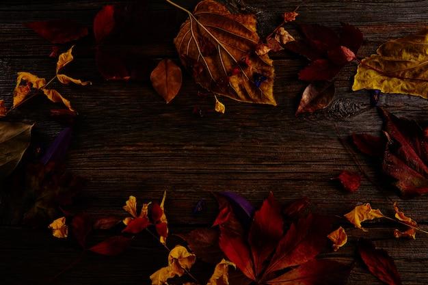 Foglie e fiori colorati secchi scuri di autunno