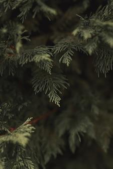 Foglie e rami che fanno uno sfondo verde con un abete e una luce soffusa