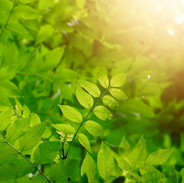 Foglie e rami verdi dell'albero nella natura