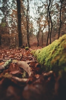 Foglie e tronchi nella foresta