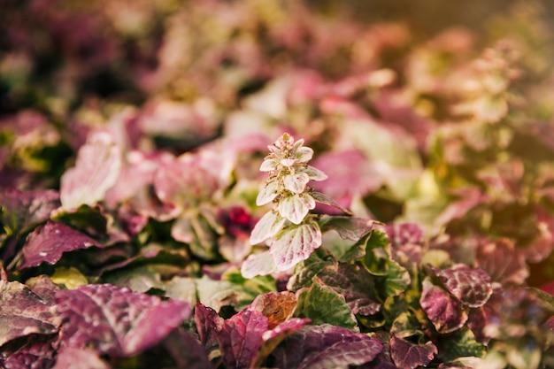 Foglie fresche di rosa in giardino