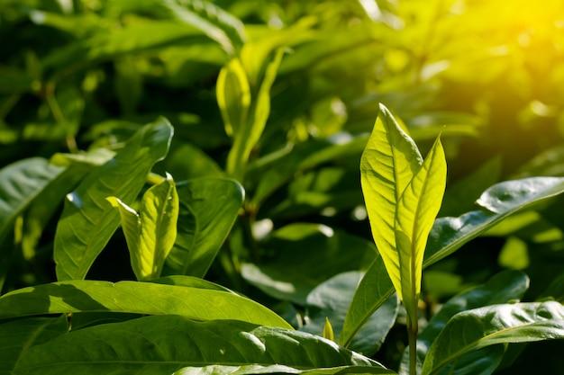 Foglie fresche e verdi, sfondi naturali.