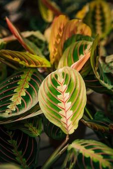 Foglie fresche per texture di sfondo naturale