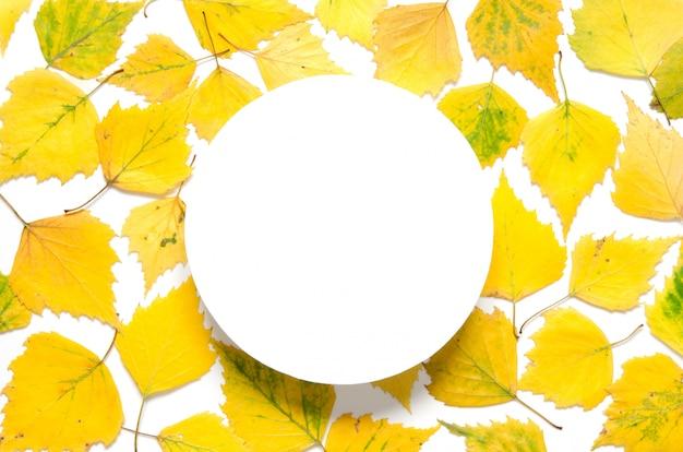 Foglie gialle autunnali con un cerchio su carta bianca