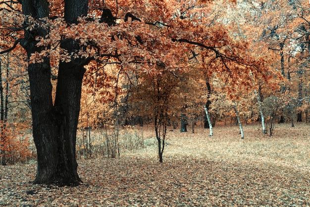 Foglie gialle di una vecchia quercia. autunno