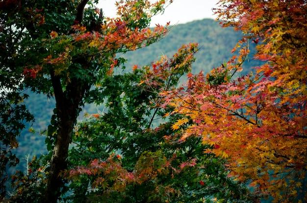 Foglie gialle, verdi e rosse che pendono dagli alberi