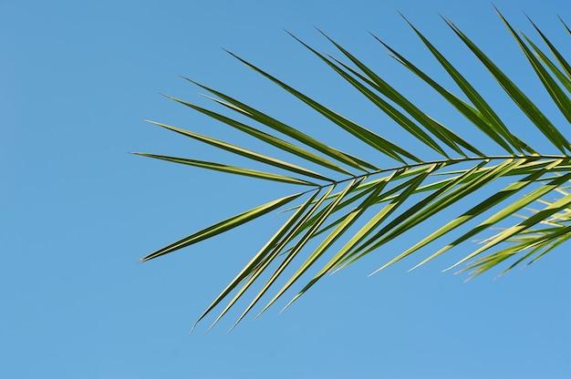 Foglie sui rami della noce di cocco con cielo blu