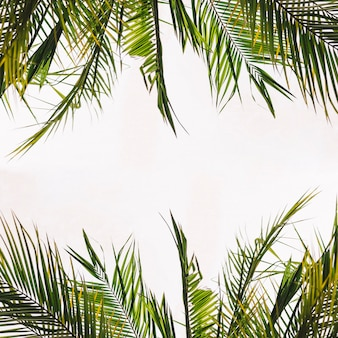 Foglie tropicali con spazio