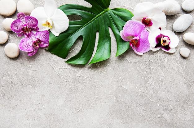 Foglie tropicali monstera e fiori di orchidea