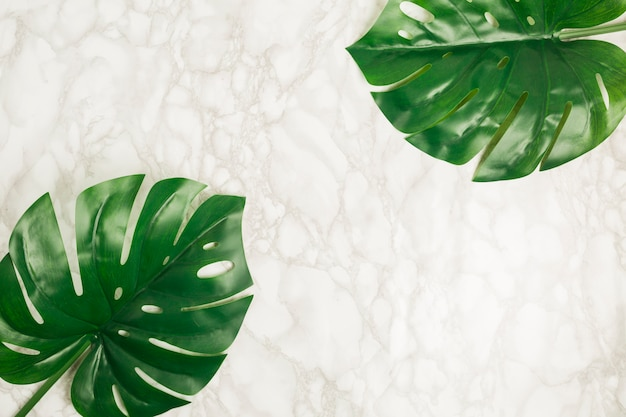 Foglie tropicali tropicali di vista superiore su marmo
