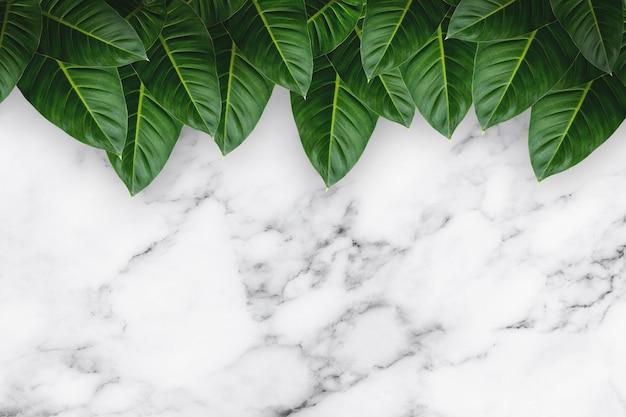 Foglie tropicali verdi su fondo di marmo bianco.