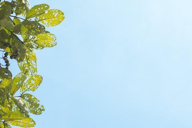 Foglie tropicali verdi su sfondo blu del cielo