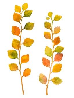 Foglie variopinte dell'acquerello di autunno isolate su fondo bianco