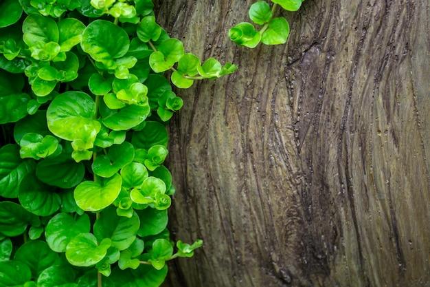 Foglie verdi con fondo di legno. tronco d'albero e foglie piccole. con posto per il testo.