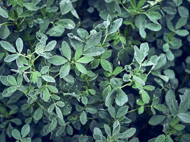 Foglie verdi con goccia di acqua su sfondo naturale.