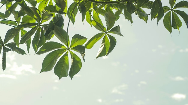 Foglie verdi con il fondo del cielo nella luce del giorno