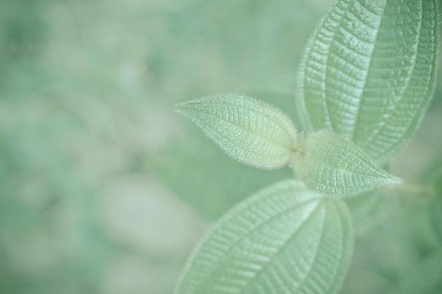 Foglie verdi con il fondo della carta da parati della natura della molla leggera del bokeh