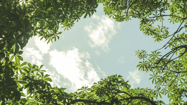 Foglie verdi con il fondo della struttura del cielo nella luce del giorno