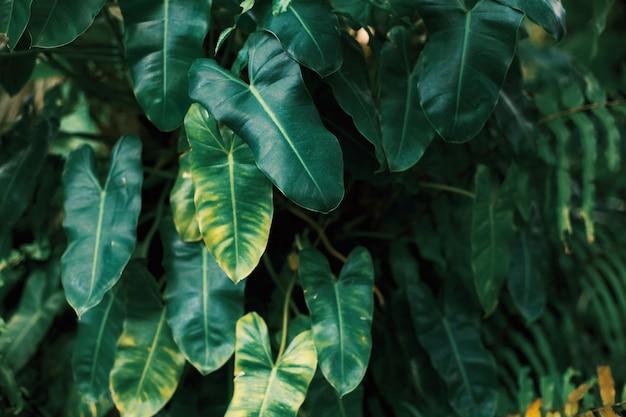Foglie verdi con la luce del sole in natura.