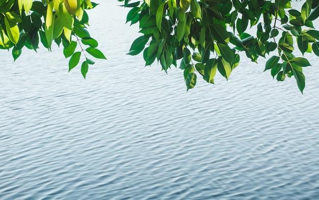 Foglie verdi con sfondo di fiume e copia spazio per inserire il testo.