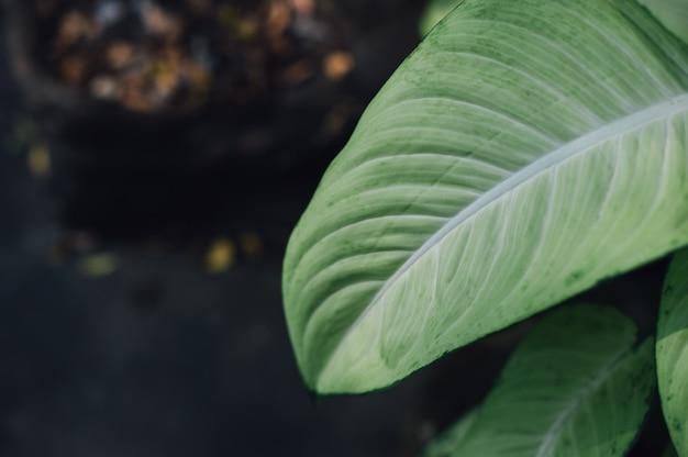 Foglie verdi dalla natura area verde e foglie concetto naturale