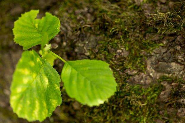 Foglie verdi defocused con campo di erba