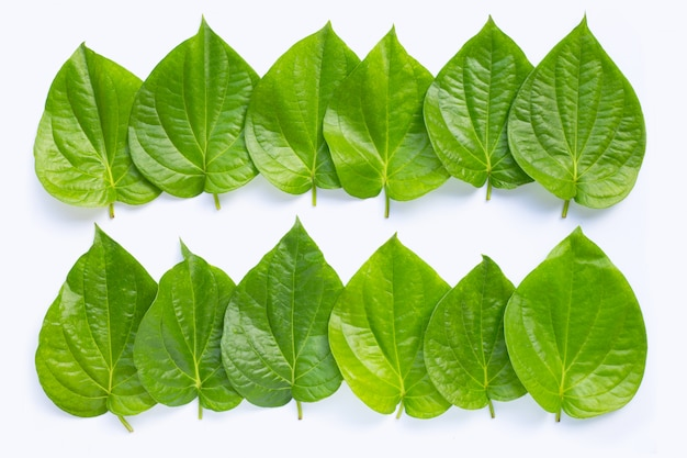 Foglie verdi del betel su bianco