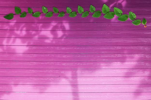 Foglie verdi del confine della natura di coatbuttons e dell'albero di ombra su legno magenta