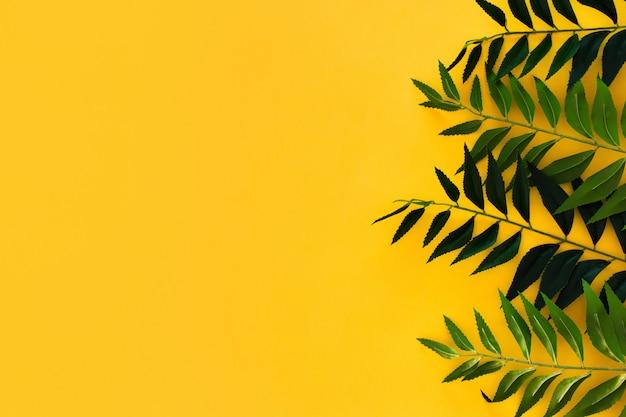Foglie verdi del confine su giallo con copyspace