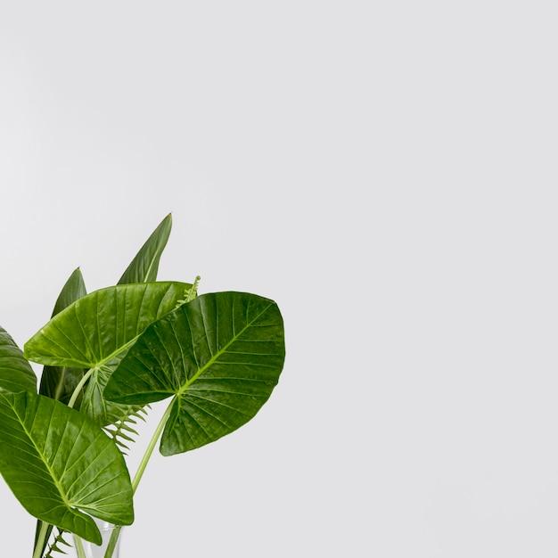 Foglie verdi del primo piano con lo spazio della copia