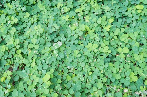 Foglie verdi del primo piano della pianta nei precedenti di struttura del giardino