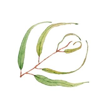 Foglie verdi del whith del ramo dell'acquerello. isolato