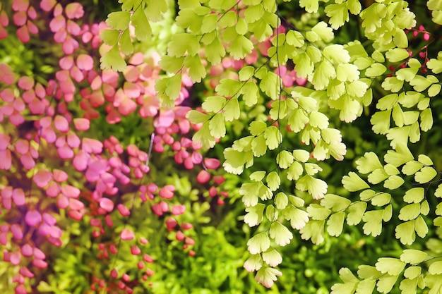 Foglie verdi dell'albero e foglie di rosa nel fondo con luce solare dietro.