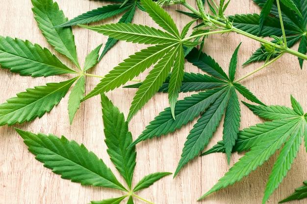 Foglie verdi della marijuana su una tavola di legno