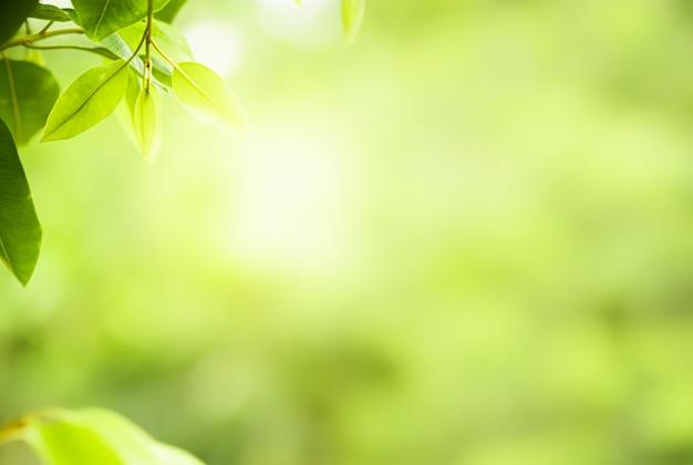 Foglie verdi della natura sul fondo vago dell'albero della pianta con luce solare