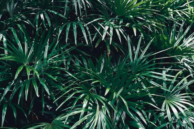 Foglie verdi delle foglie verdi del fondo della felce concetto della molla della natura.