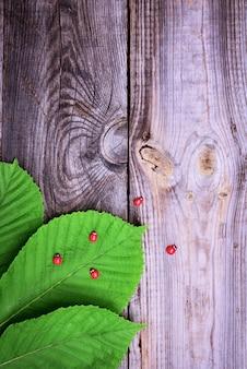 Foglie verdi di castagno su una superficie di legno grigia